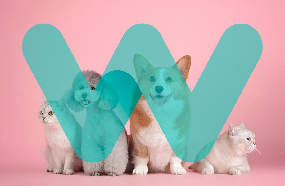 WeCan_blog_veterinario_009
